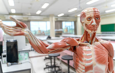 program Anatomy & Physiology photo